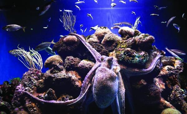 Palmaaquarium.jpg