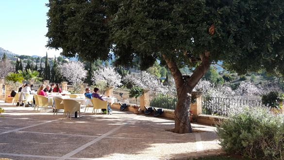 Relaxen auf unserer Terrasse zur Mandelblüte im Januar!